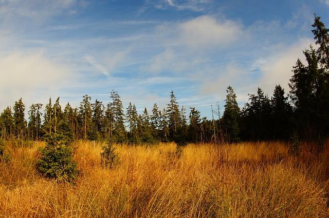 Landscape, Moor, Nature Reserve, Wetland, Nature