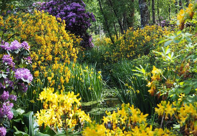 Moor, Pond, Azaleas, Rhododendron, Swampy, Moorland