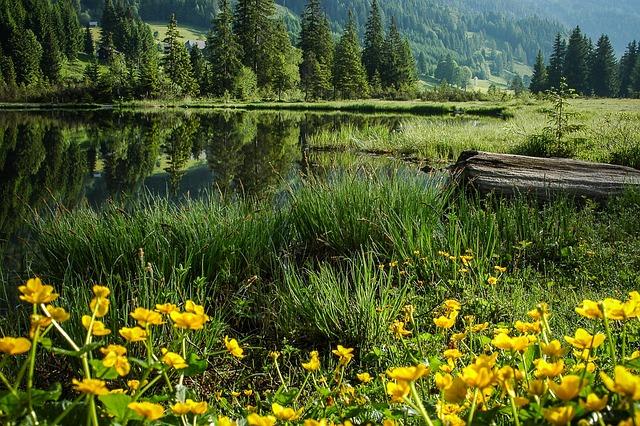 Bergsee, Bog Lake, Lake, Clear, Austria, More
