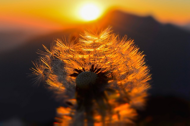 Sunrise, Mountains, Nature, Morning, Morgenrot