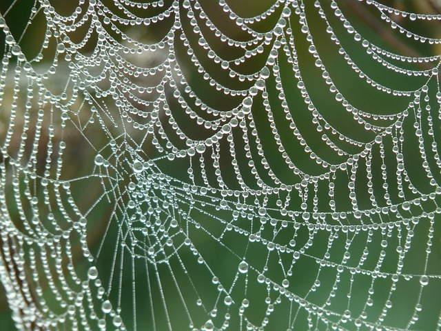 Cobweb, Morgentau, Dew, Dewdrop, Drip, Network