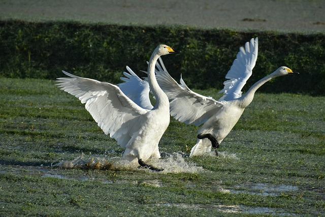 Animal, The Countryside, Morning, Waterside, Bird