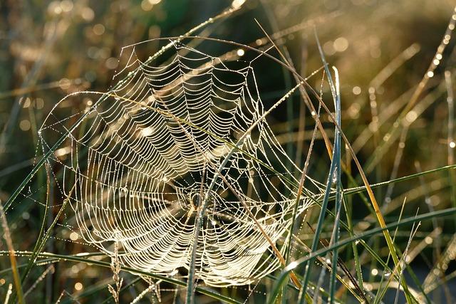 Spider Web, Webs, Spider, Nature, Dew, Cobweb, Morning