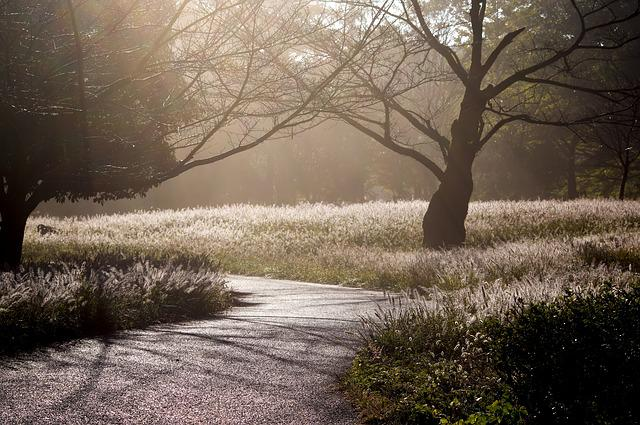 Japan, Arboretum, Backlight, Morning Fog, Forest
