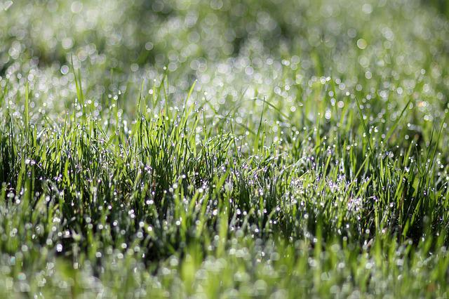 Grass, Dew, Morning, Green, Wet, Water