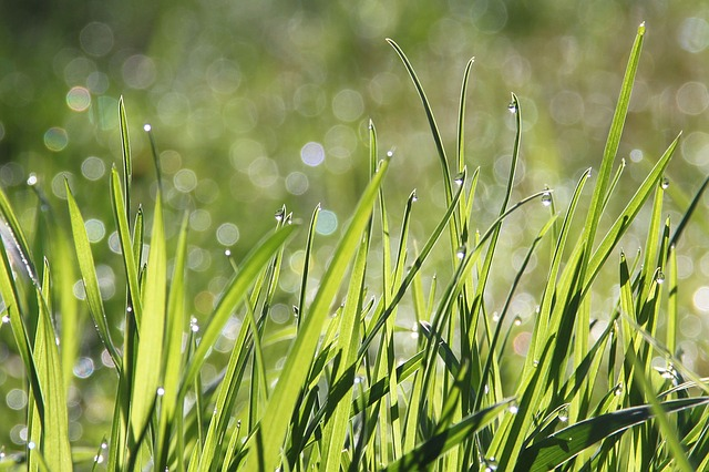Dew, Morning, Meadow, Bokeh, Morgentau, Drip, Dewdrop