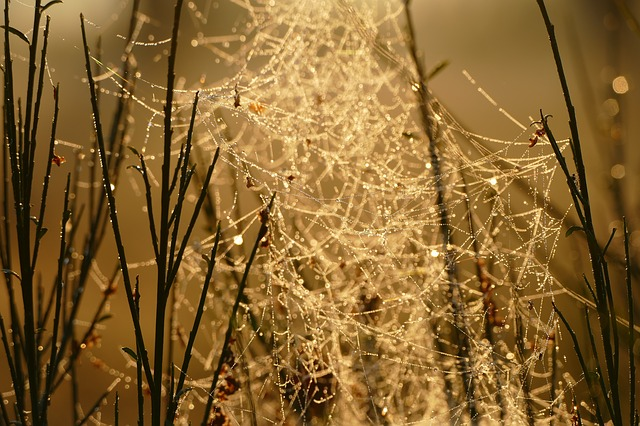 Nature, Sunrise, Landscape, Morning, Spider Web, Fog