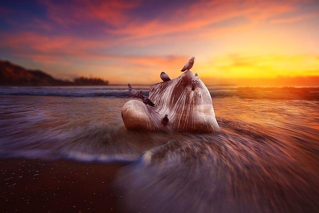 Pigeons, Rocks, Water, Sea, River, Morning, Sunrise