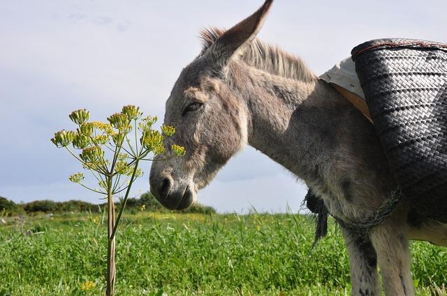 Donkey, Nature, Morocco, Animal, Creature, Landscape