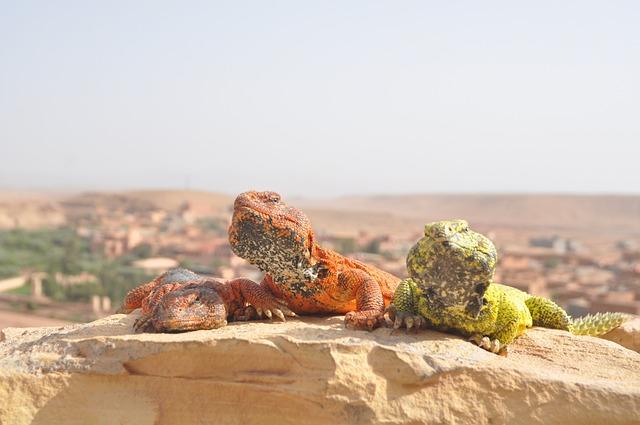 Desert, Sahara, Morocco, Dunes
