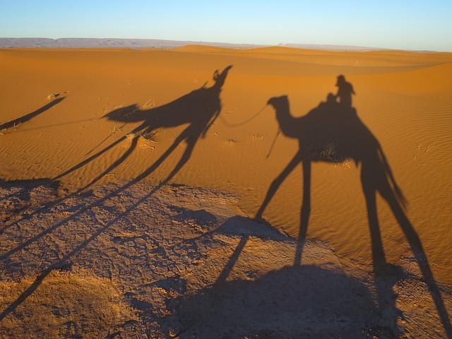 Desert, Sand, Shadow Camel, Morocco, Sand Dune, Nature