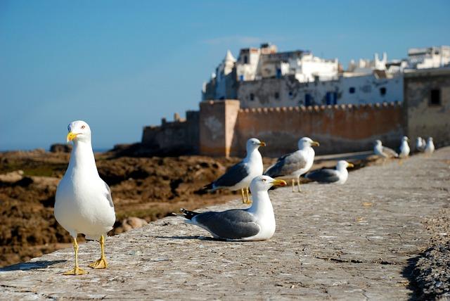 Essaouira, Morocco, Africa, Costa, Sea, Seagull, Travel