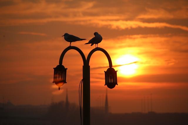 Seagull, Marine, Mosque, Solar, Galata Bridge, V