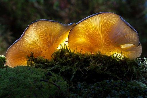 Mushroom, Bright, Nature, Plant, Moss, Forest Mushrooms