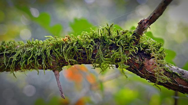 Moss, Road, Nature, Forest, Green, Weave, Branches