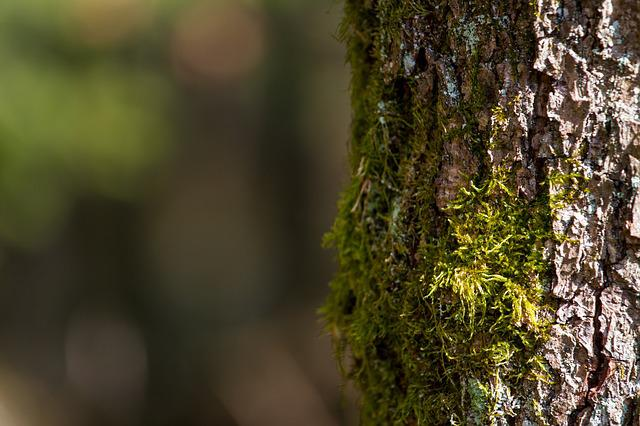 Tree, Bark, Nature, Wood, Moss, Background, Log, Green