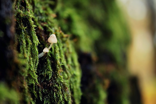 Mushroom, Green, Nature, Litter, Moss, Forest, Closeup