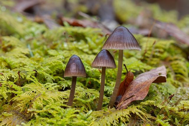 Mushroom, Moss, Small Mushroom, Mushroom Group, Sponge