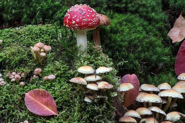 Forest, Moss, Mushrooms, Moss Fliegenpilz, Forest Floor