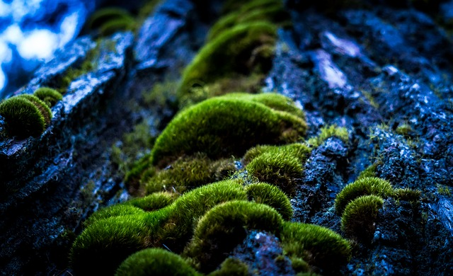Forrest, Macro Photography, Moss, Mystical, Tree Trunk
