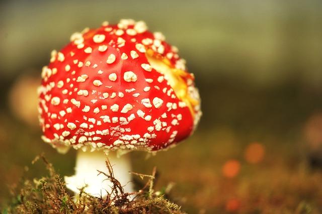 Mushroom, Fly Agaric, Moss, Toxic, Nature, Autumn