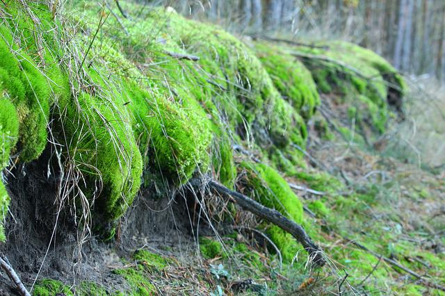 Moss, Forest, Nature, Root, Root Network, Log
