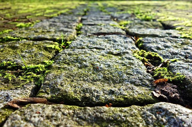 Cobble Stone, Cobble, Stone, Path, Walkway, Paved, Moss
