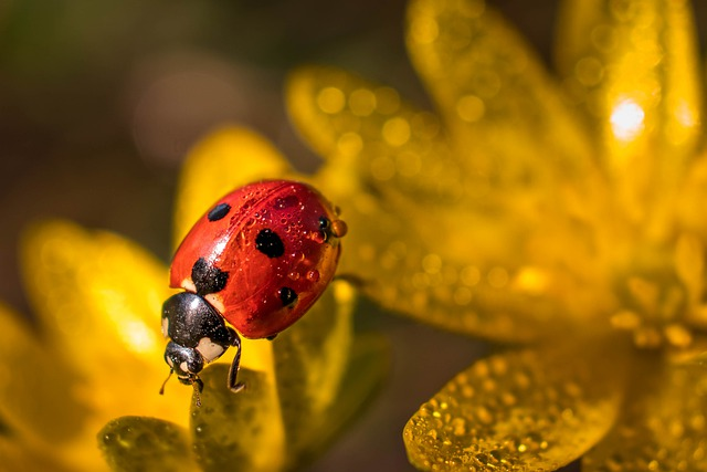 Greens, Moss, Rosa, Insect, Nature, Background, Summer