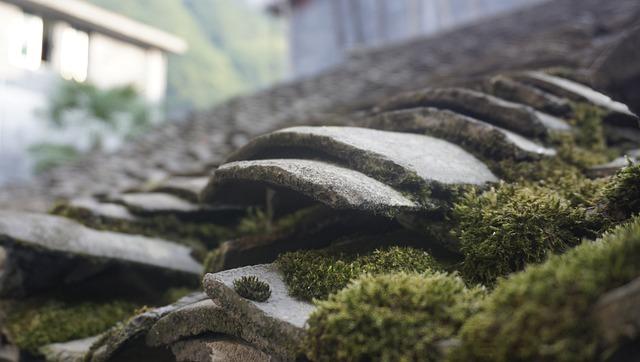 Tile, Moss, Ancient