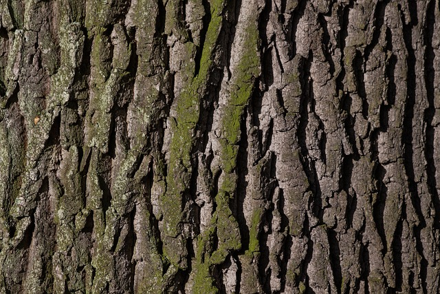 Bark, Tree, Oak, Old Oak, Bast, Shed Bark, Moss, Green