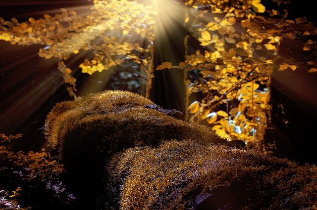 Forest, Trees, Moss, Autumn, Sunlight, Landscape