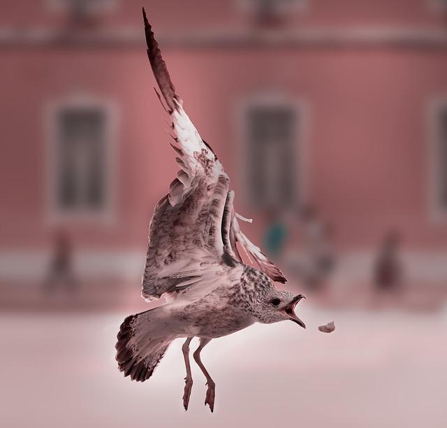 Lisbon, Most Beach, Summer, Gulls