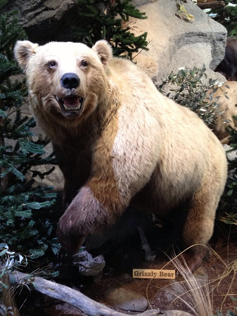 Grizzly Bear, Scarecrow, Museum, Mount, Taxidermy, Bear