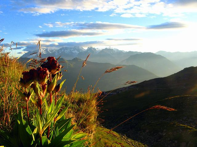 Alps, Flower, Mountain, Ski, Light, Nature, Landscape