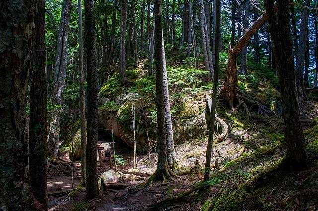 Mountain Climbing, Mountain, Woods, Forest