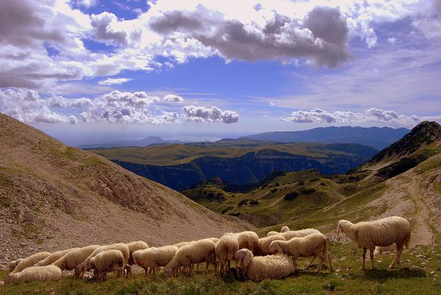 Flock, Landscape, Mountain, Animal, Clouds, Sheep