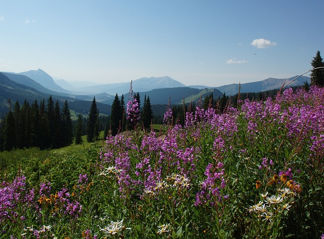 Wildflower, Purple, Mountain, Sky, Landscape, Colorado