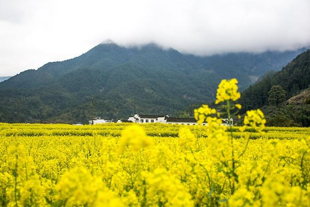 Rape, Wuyuan, Mountain