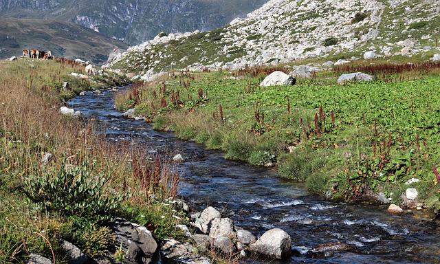 Mountain River, Mountain Meadow, Mountains, River
