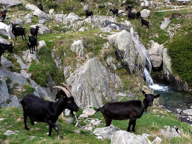Goats, Black, Flock, Rock Landscape, Mountain Stream