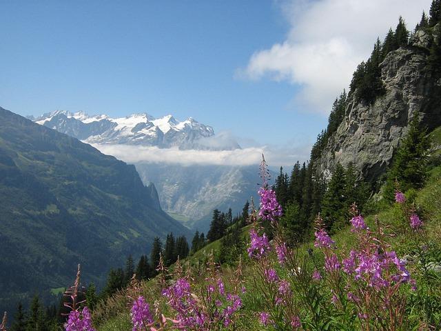 Alps, Switzerland, Mountains, Fireweed, Snow, Rocks