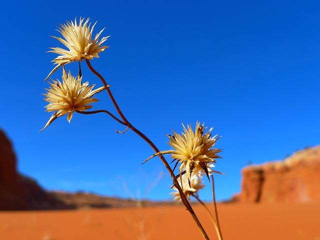 Desert, Flower, Landscape, Mountains, Nature, Outside