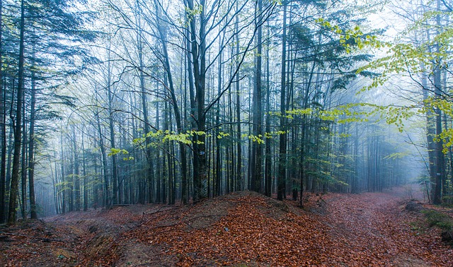 Mountains, Forest, Trees, Fog, Path, Spring, Leaves