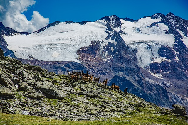 Italy, Mountains, Snow, Glacier, Goats, Herd, Meadow