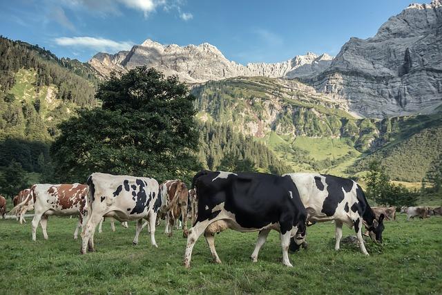 Alpine, Panorama, Karwendel, Cows, Dolomites, Mountains