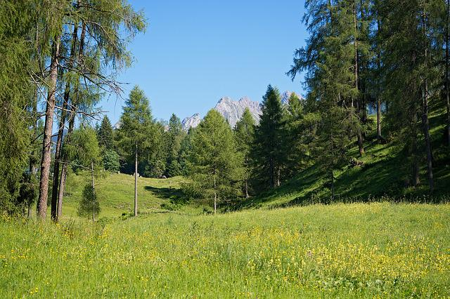 Landscape, Nature, Meadow, Trees, Mountains, Sky
