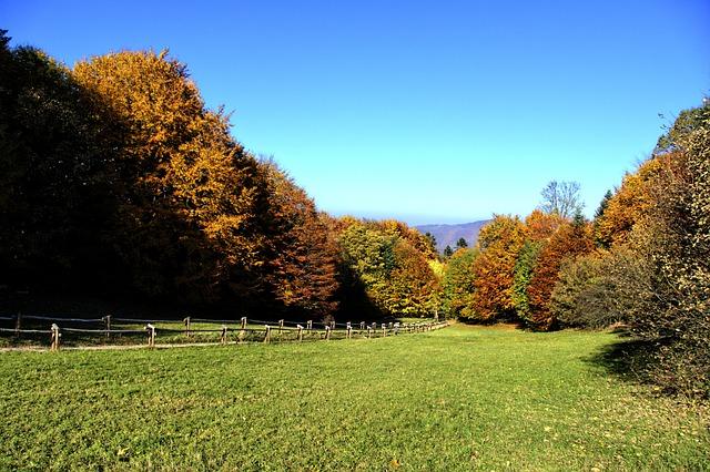 Mountains, Pieniny, Landscape, Poland, Tree, Autumn
