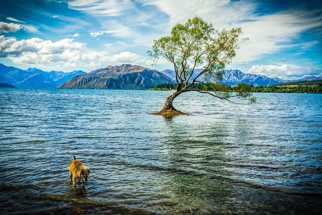 Wanaka, New Zealand, Lake Wanaka, Mountains, Landscape