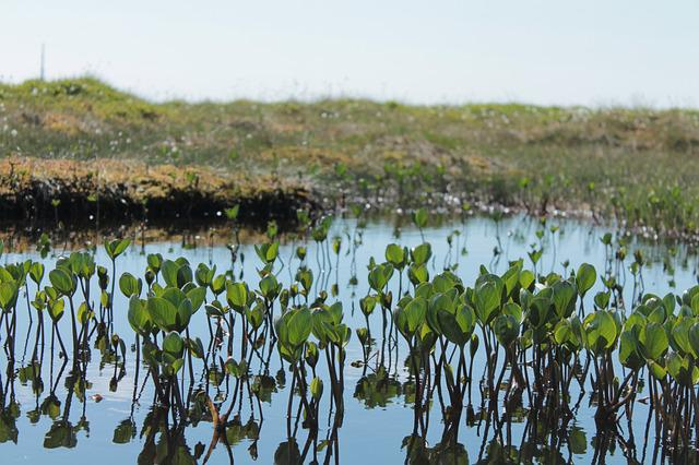 Plants, Water Plants, Peat, Norway, Nature, Mountains