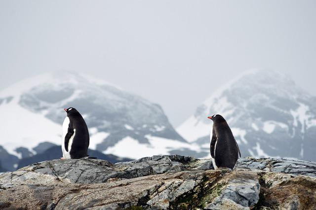 Penguins, Mountains, Snow, Ice, Cold, Polar, Animals